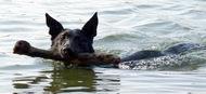 Gerry plaváček :-)